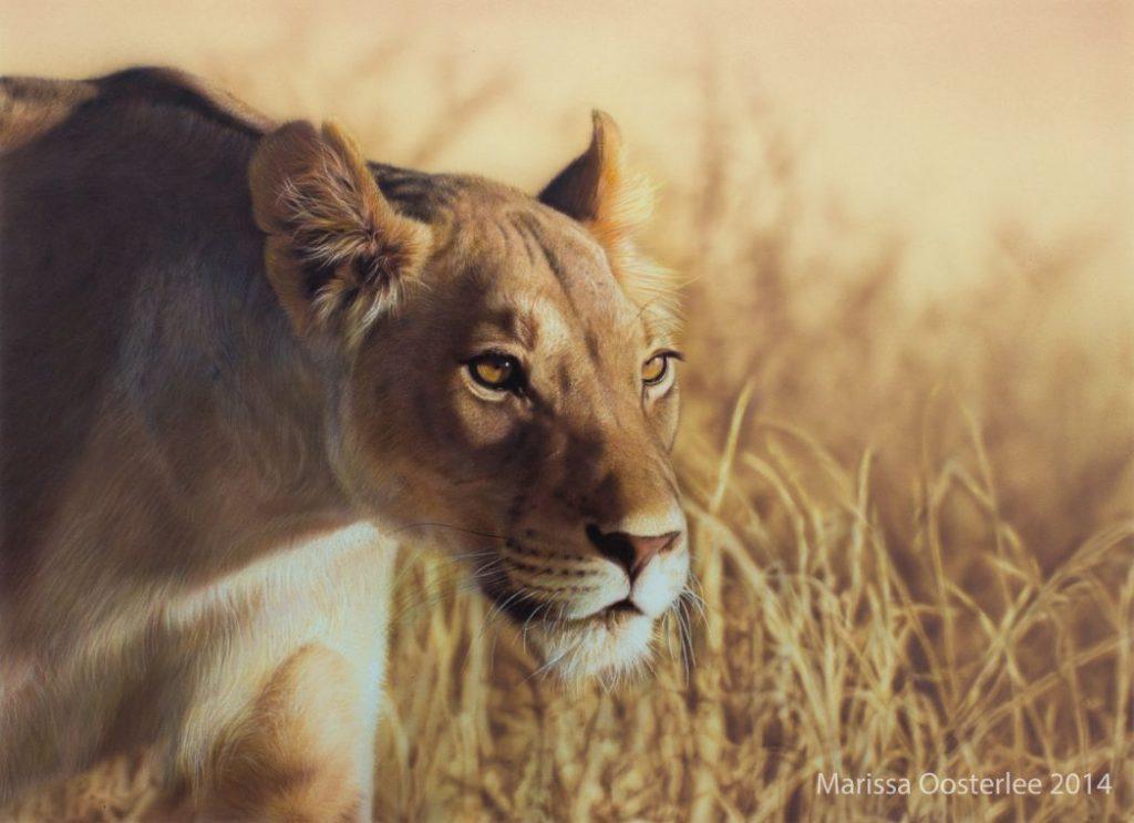 Wildlife_belg